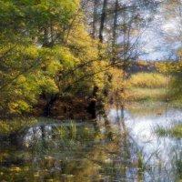 Затянуло бурой тиной гладь старинного пруда..... :: shvlad