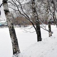 Долгожданная зима! :: Татьяна Помогалова