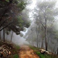 Туман :: Аркадий Басович