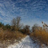 Когда зимний день - в радость... :: Павел Петрович Тодоров