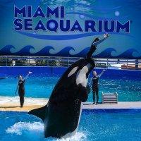 Miami Seaquarium :: Naum