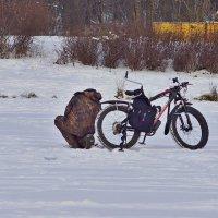 На зимней рыбалке :: Наталья Лакомова
