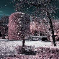 В лесу родилась елочка а может и не елочка, и может не в лесу :: Alexander Varykhanov