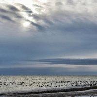 черное море :: Александр Довгий