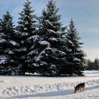 Зимняя прогулка :: Елена Пономарева