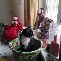 Готовимся с моей незаменимой помощницей кошечкой Фросей к мастер-классам,! :: Ольга Кривых