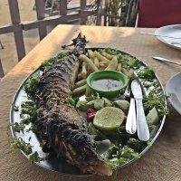 Лёгкий   обед  свежей акулятинкой! :: Виталий Селиванов