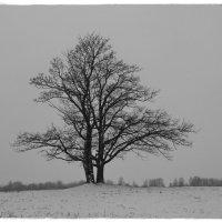 Накрыта снега палантином земля спит сладким детским сном..... :: Tatiana Markova