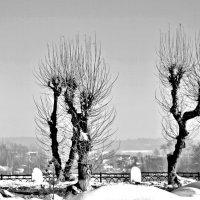 Черно-белая зима... :: Aquarius - Сергей