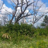 Берегите лес :: Наталья А