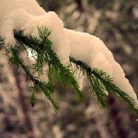 снежок пушистый на ветвях лежит.... :: леонид логинов