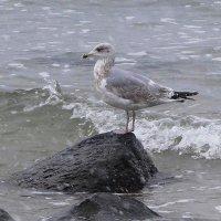 Ждёт у моря погоды... :: Маргарита Батырева