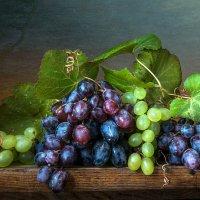 Гроздь винограда. :: Людмила Костюченко