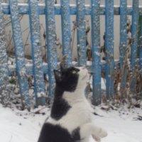 Чистые стильные кошачьи эмоции!... :: Алекс Аро Аро