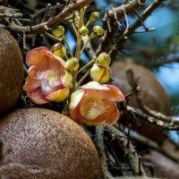 В Ботаническом саду. Шри Ланка :: Oleg