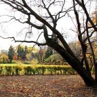 В ботаническом саду. :: Александр Карманов