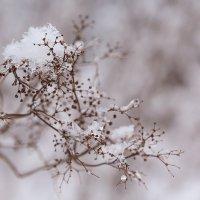 То дождь, то снег... :: Наталья Кузнецова