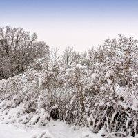 Вот и выпал снег. :: Владимир M