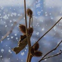 А за окном зима ... :: Олег Кондрашов