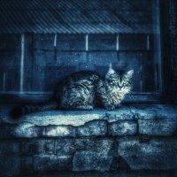 А скоро будет год кота? :: Ирина Сивовол