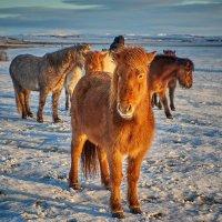 Утром в Исландии :: Игорь Иванов