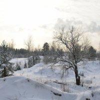 Зимний лес :: Aleksandr Ivanov67 Иванов