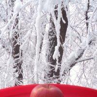 """Фотопоэма """"Яблочная зима""""!... :: Алекс Аро Аро"""