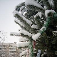 Снег выпал.... :: Serg