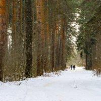 Прогулка в зимнем лесу :: Юрий Бичеров