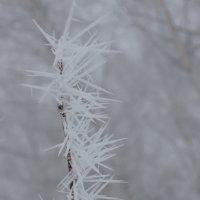 Снежные иголки :: Ольга