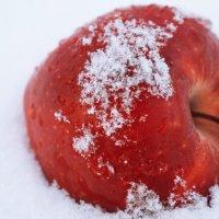 Яблоки на снегу! :: Таня Дорожко