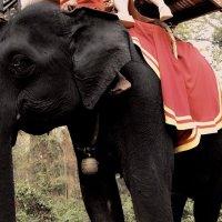 Тайланд! :: Натали Пам