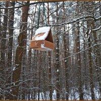 лесные домишки... :: Vladimir Semenchukov