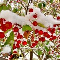 Снежок :: Владимир