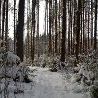 Красоты зимнего леса :: Aleksandr Ivanov67 Иванов