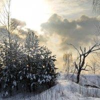 Одинокое дерево :: Aleksandr Ivanov67 Иванов