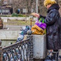 кормление голубей :: олег