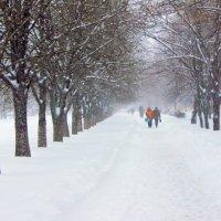 Заметает зима, заметает... :: Валентина ツ ღ✿ღ