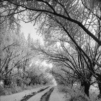 Зимняя дорога :: Елена Ерошевич