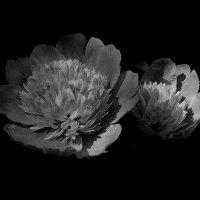 Черно-белое лето :: Natali