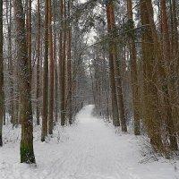 Выпавший снег преобразил лес :: Маргарита Батырева