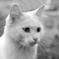 Кіт :: Танюша