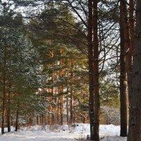 в лесу :: Светлана