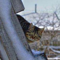 первая зима Сальво :: Роза Бара