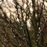 Запах весны :: Alexander Andronik