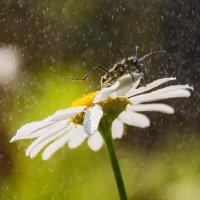 Бегом от дождя :: Наталья Димова