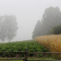 Летний туман. :: Нина Бурченкова.