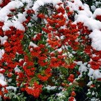 Белое на красном :: Мария