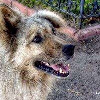 Собак с человеческим лицом ! :: Борис Соловьев