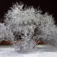 Черный вечер.Белый снег. :: Евгения Корнилкова